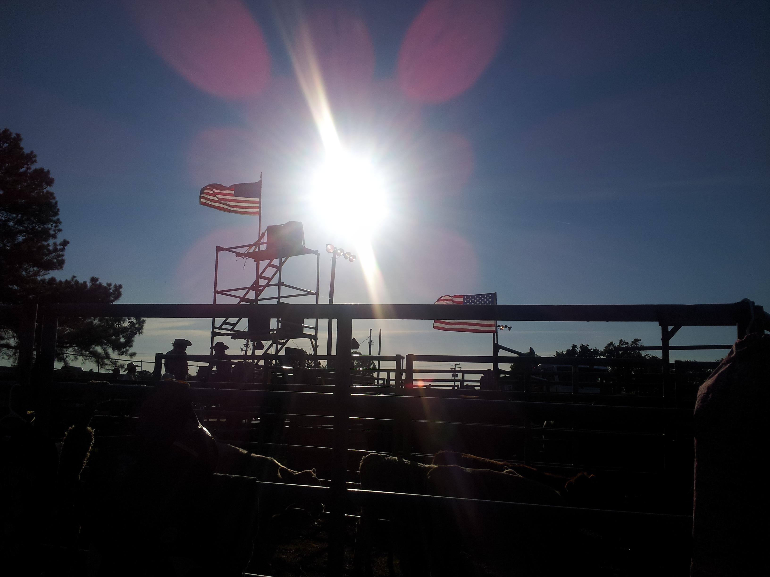 2012 khedive rodeo